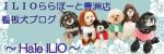 豊洲ブログ