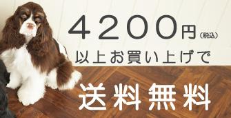 ILIO Online Store 送料無料