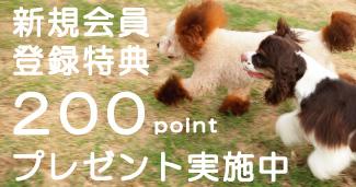 ILIO Online Store 新規会員募集